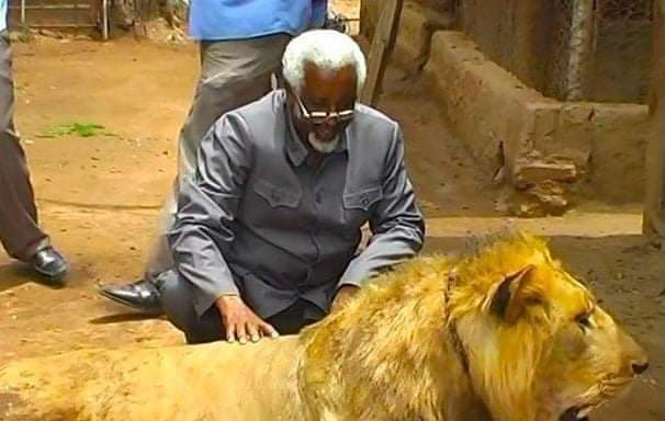 Pet lions escape in Somaliland causing havoc