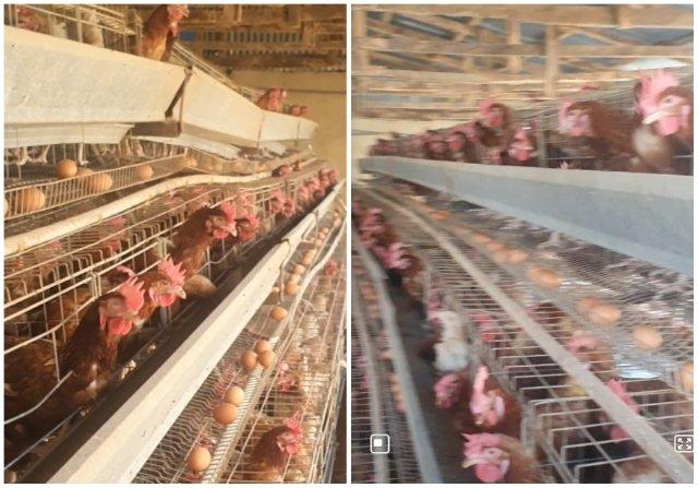 FEC approves additional N665m for poultry farmers in four states
