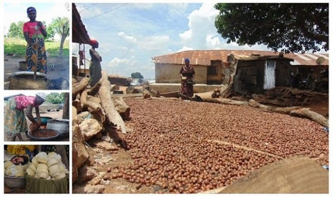 Inside Nigeria's Shea butter economy: Neglected, time consuming, labour intensive